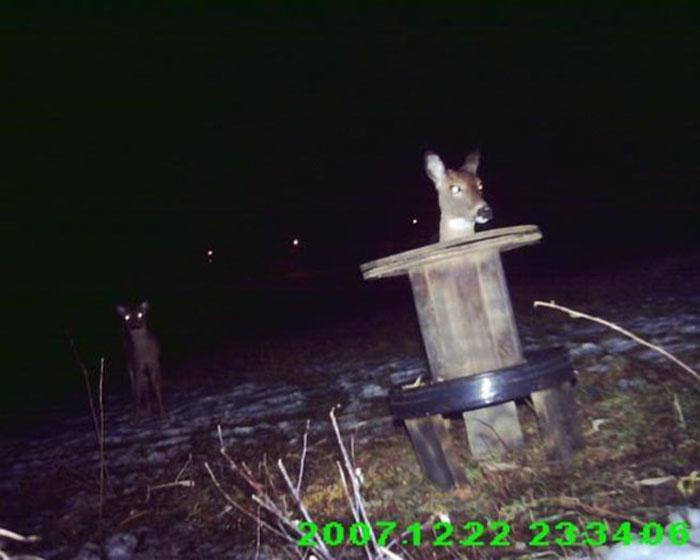 These Deer