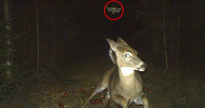 Trail Cam App For Iphone