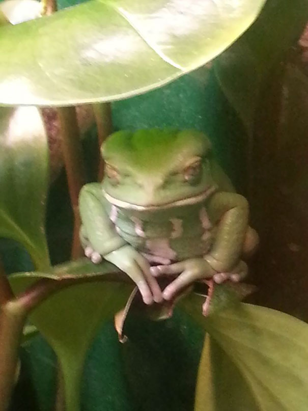 This Frog Was Definitely Up To Something