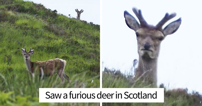 10+ Hilariously Unphotogenic Animals That You Will Feel Guilty For Laughing At