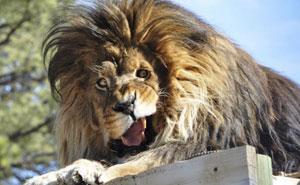 10+ Animales  tan terriblemente poco fotogénicos que no quieren que veas sus fotos