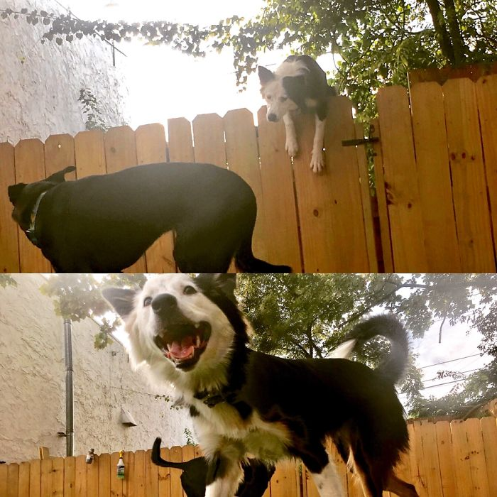 My Daycare Extended The Fences To Keep Me From Jumping Them- Didn't Work!
