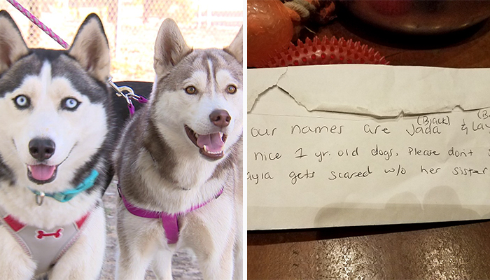 Someone Found These 2 Huskies Abandoned At A Dog Park With A Heartbreaking Note
