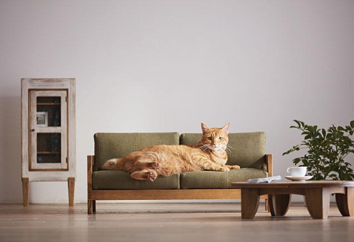mini-furniture-cats-okawa-kagu-japan-1