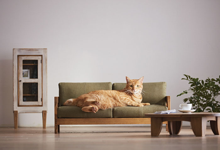 Miniature Cat Furniture From Japan To Please Your Master