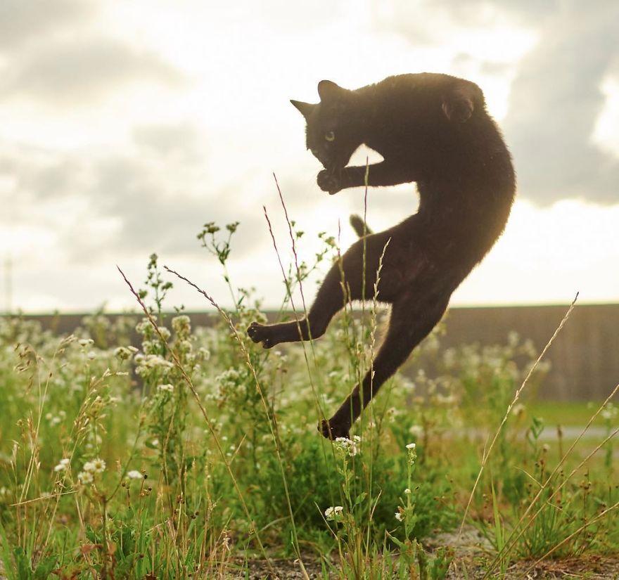 Ninja-Cats-Photography-Hisakata-Hiroyuki