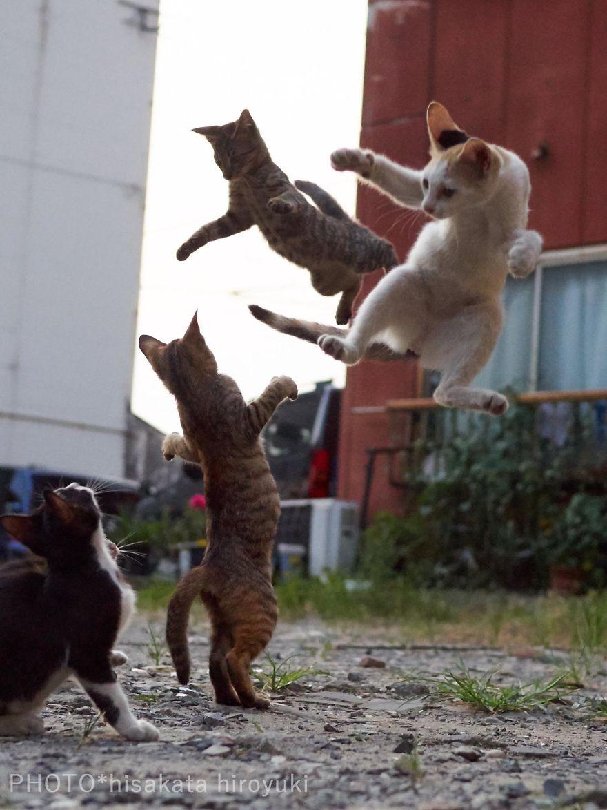 """Résultat de recherche d'images pour """"chat photographe"""""""