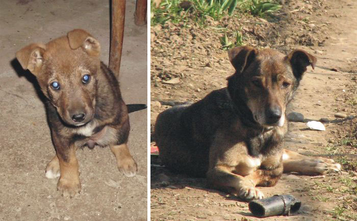 Our 3-Legged Doggie On The Day We Took Her Home And Today, 8 Years Later