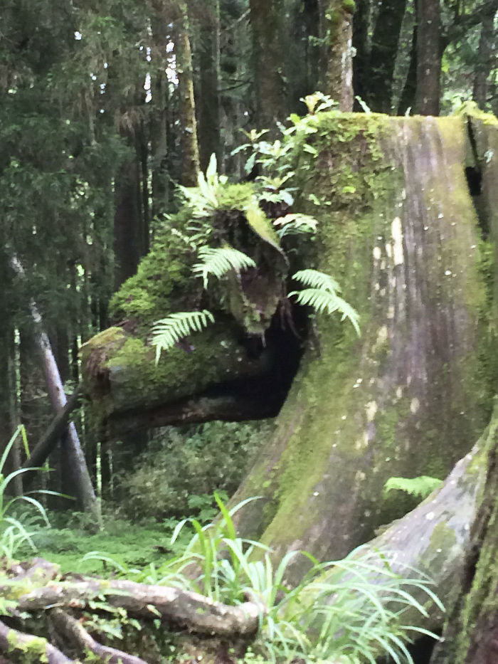 This Tree Stump Looks Like A Pig