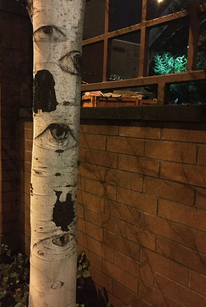 This Tree Looks Like It Has Eyes