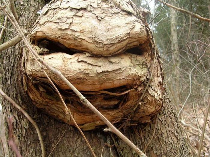Teenage Mutant Ninja Tree
