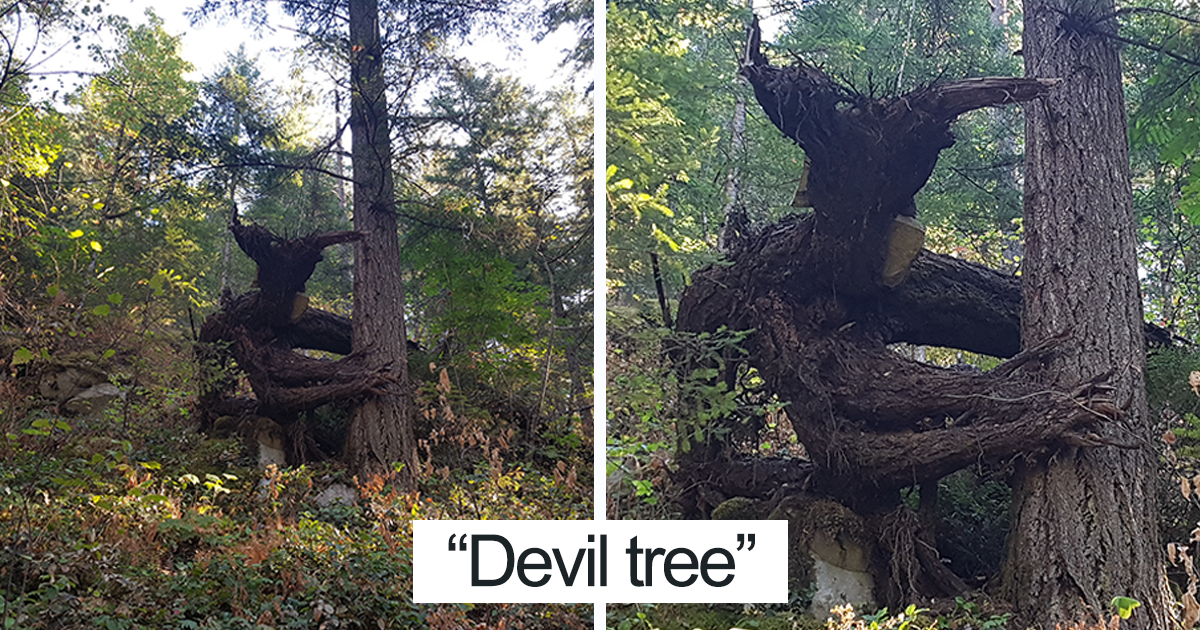 63 trees that look like something else and will make you look twice