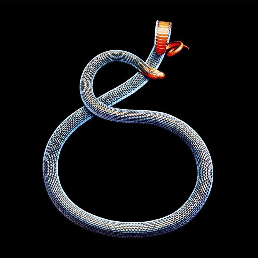 Bị cắn bởi loài rắn độc nhất thế giới nhưng nhiếp ảnh gia này vẫn cố gắng hoàn thành bộ ảnh tuyệt đẹp - Ảnh 6.