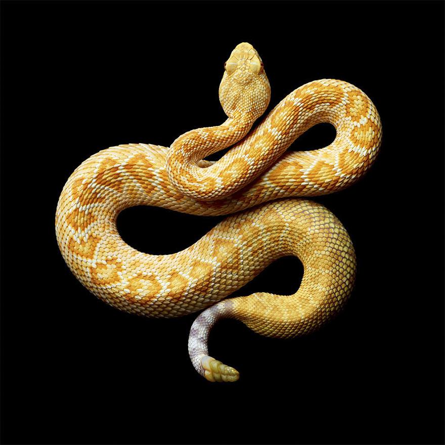 Bị cắn bởi loài rắn độc nhất thế giới nhưng nhiếp ảnh gia này vẫn cố gắng hoàn thành bộ ảnh tuyệt đẹp - Ảnh 16.
