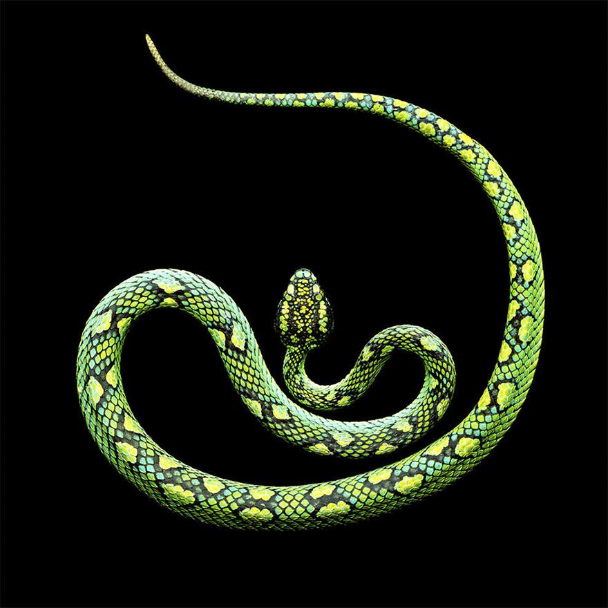 Bị cắn bởi loài rắn độc nhất thế giới nhưng nhiếp ảnh gia này vẫn cố gắng hoàn thành bộ ảnh tuyệt đẹp - Ảnh 11.