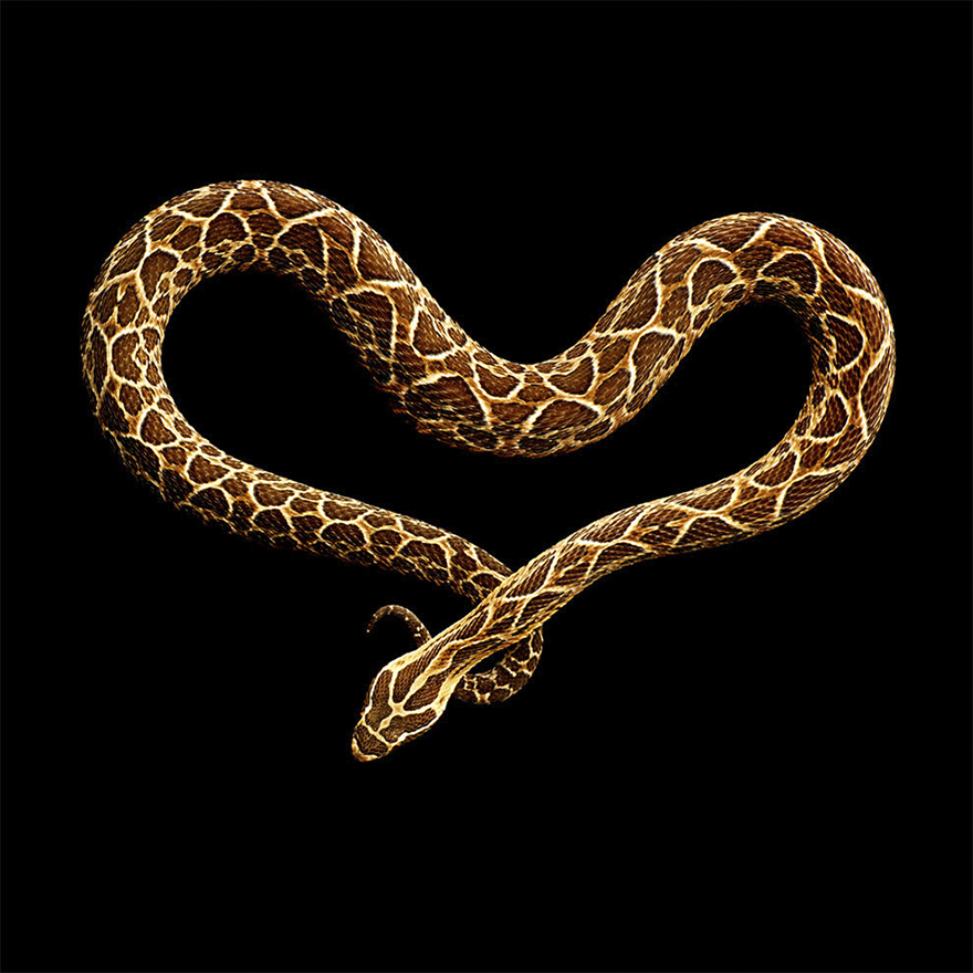 Bị cắn bởi loài rắn độc nhất thế giới nhưng nhiếp ảnh gia này vẫn cố gắng hoàn thành bộ ảnh tuyệt đẹp - Ảnh 17.