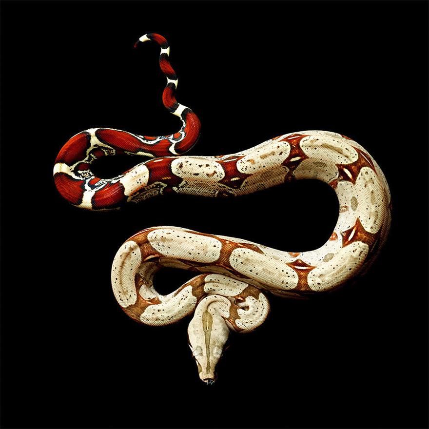 Bị cắn bởi loài rắn độc nhất thế giới nhưng nhiếp ảnh gia này vẫn cố gắng hoàn thành bộ ảnh tuyệt đẹp - Ảnh 13.