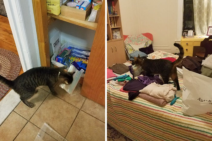 Boyfriend Doesn't Believe His GF Who Blames Cat For Missing Kitchen Objects, So She Decided To Catch Everything On Cam