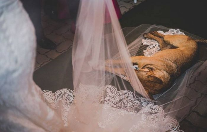 stray-dog-crash-wedding-matheus-marilia-pieroni-8