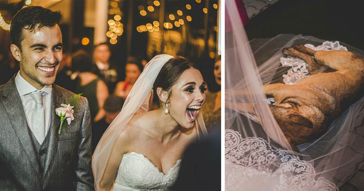 This Couple?s Reaction To A Dog Who Crashed Their Wedding Just Won The Internet