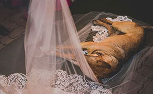 This Couple's Reaction To A Dog Who Crashed Their Wedding Just Won The Internet