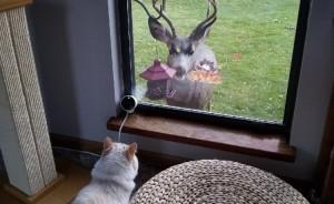 El dueño de este gato se dio cuenta de que su mascota es una princesa Disney