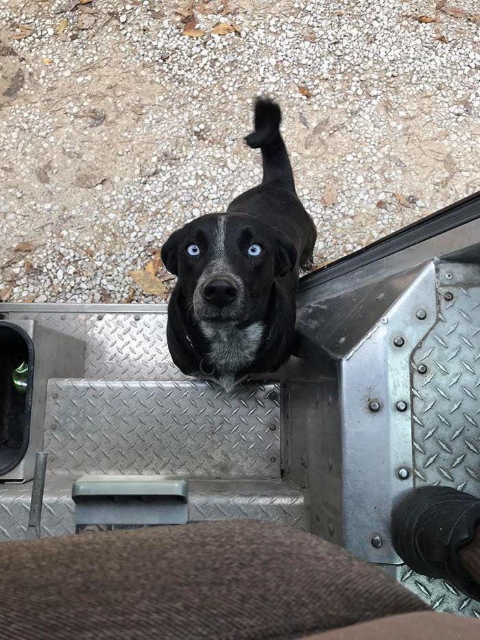 ups-dogs-facebook-group-drivers-meet-routes-sean-mccarren-17