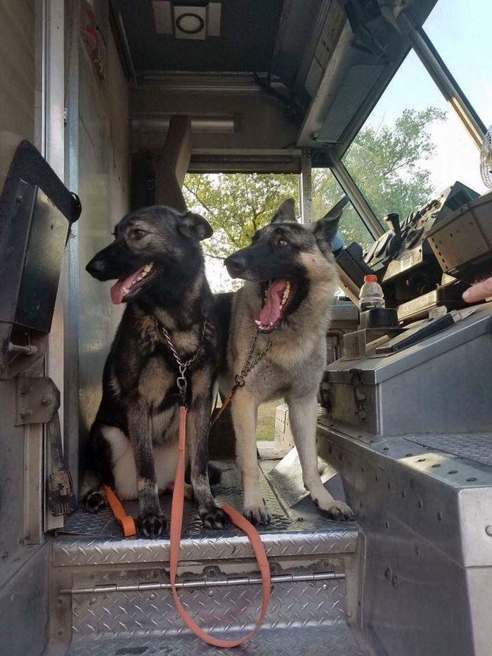 ups-dogs-facebook-group-drivers-meet-routes-sean-mccarren-20
