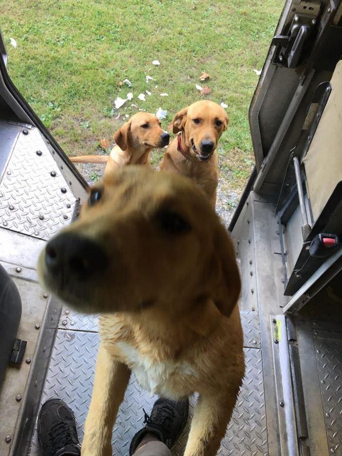 ups-dogs-facebook-group-drivers-meet-routes-sean-mccarren-21