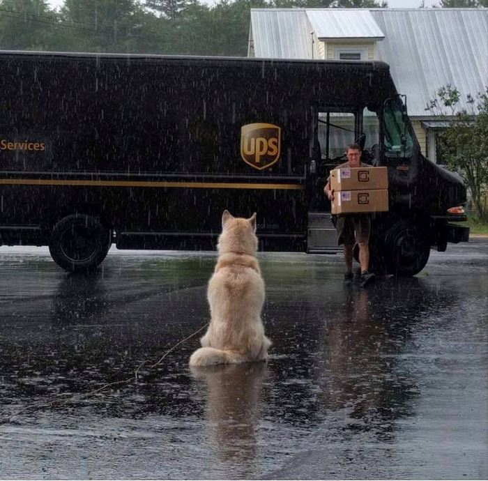 ups-dogs-facebook-group-drivers-meet-routes-sean-mccarren-32