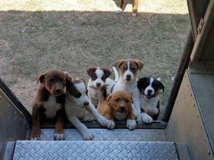 ups-dogs-facebook-group-drivers-meet-routes-sean-mccarren-37