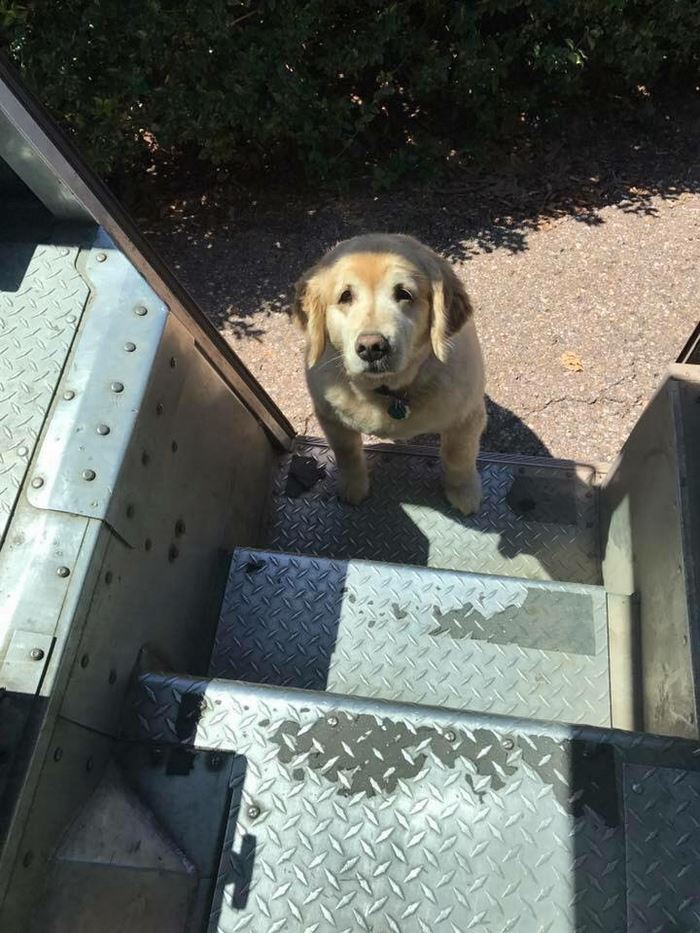 ups-dogs-facebook-group-drivers-meet-routes-sean-mccarren-6