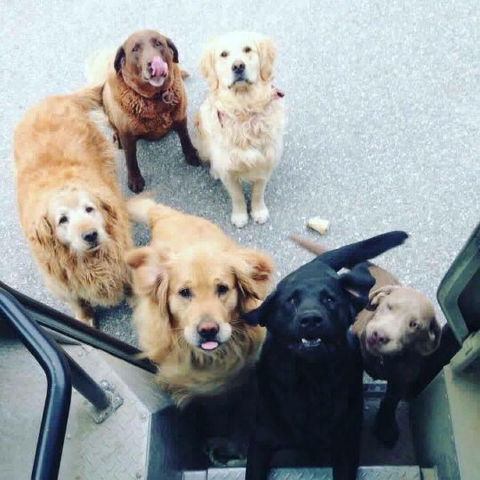 ups-dogs-facebook-group-drivers-meet-routes-sean-mccarren-9