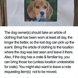 Lost Your Dog?
