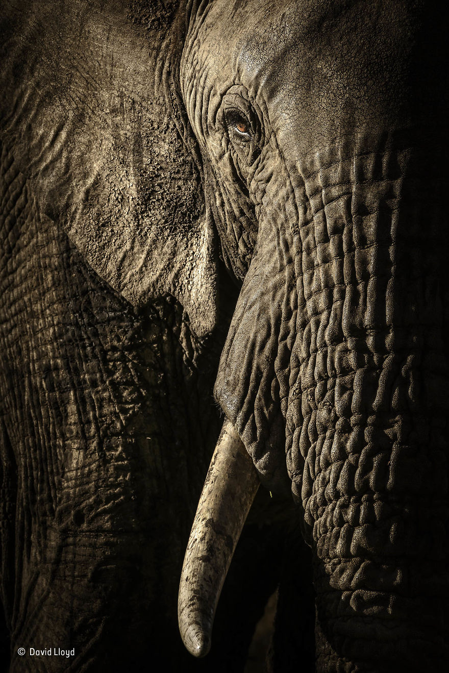 'The Power Of The Matriarch' By David Lloyd, New Zealand/UK, Animal Portraits Finalist