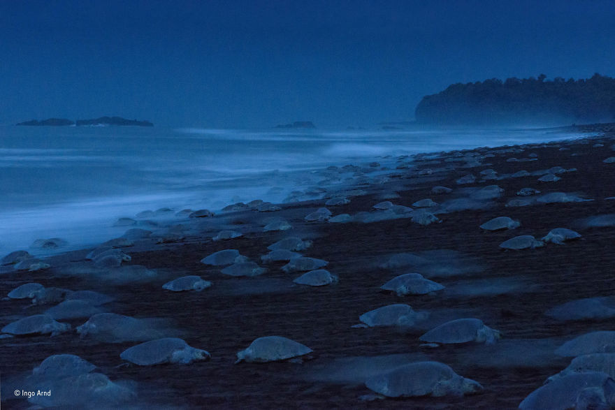 'Night Of The Turtles' By Ingo Arndt, Germany, Behaviour: Amphibians And Reptiles Finalist