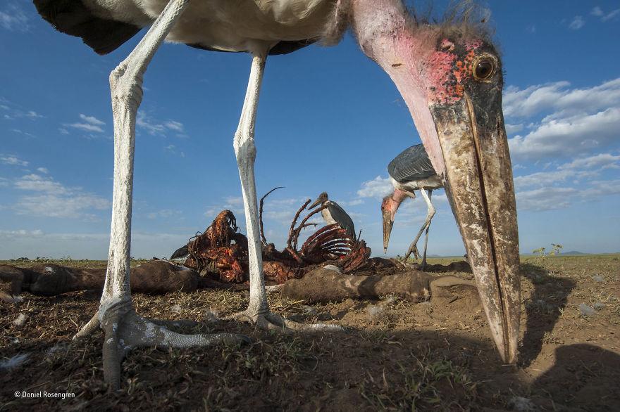 'Picky Eaters' By Daniel Rosengren, Sweden, Behaviour: Birds Finalist