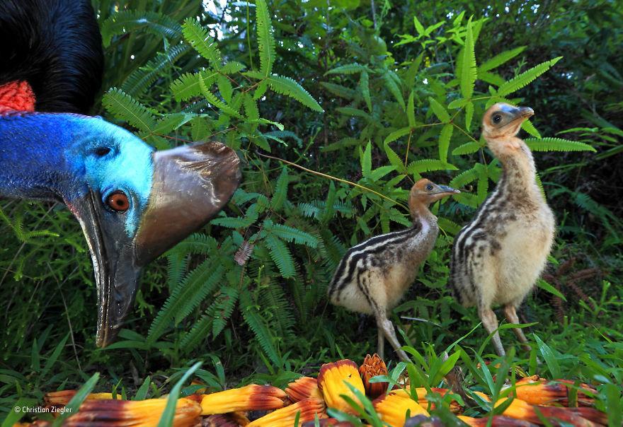 'Father Knows Best' By Christian Ziegler, Germany, Behaviour: Birds Finalist
