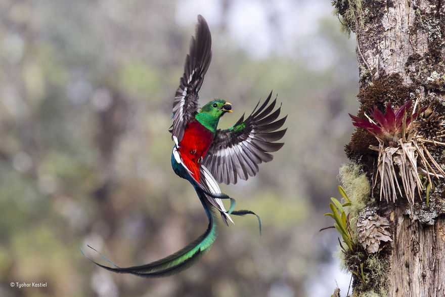'Resplendent Delivery' By Tyohar Kastiel, Israel, Behaviour: Birds Finalist