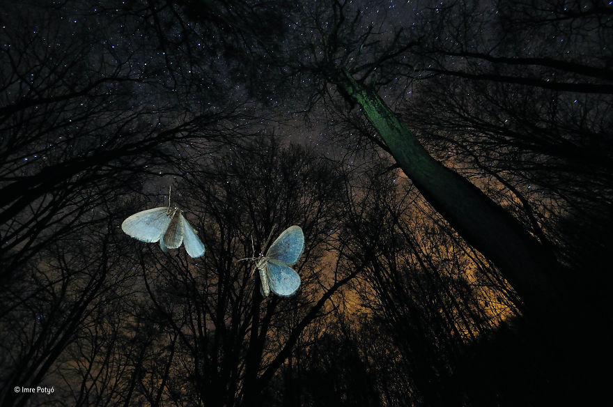 'Wings Of Winter' By Imre Potyó, Hungary, Behaviour: Invertebrates Finalist