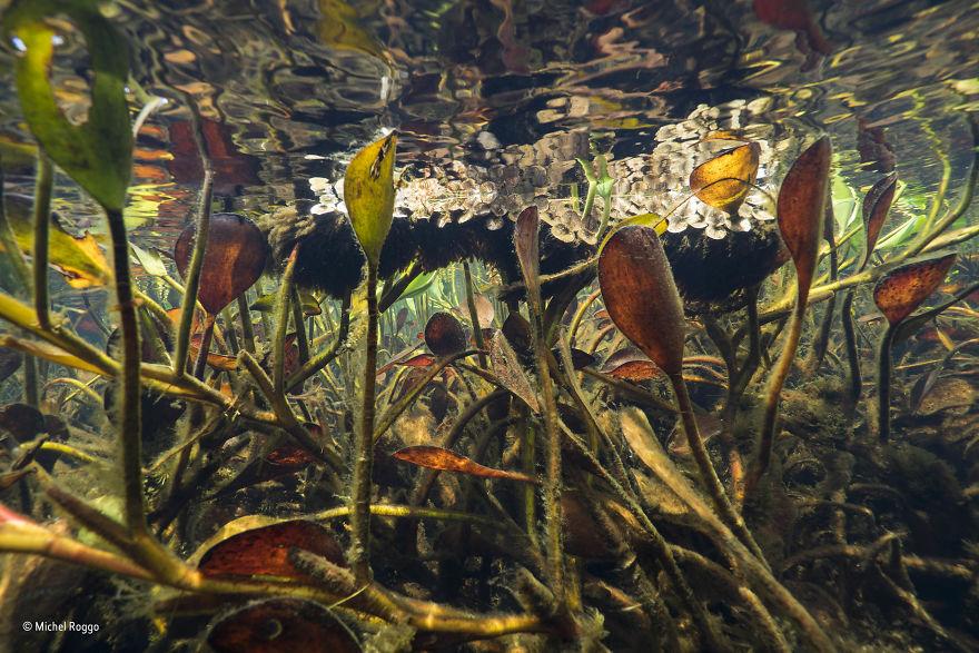 'Freshwater Eden' By Michel Roggo, Switzerland, Plants And Fungi Finalist