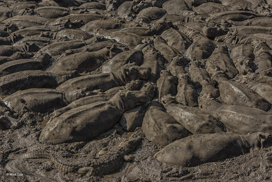 'The Mud Crowd' By Mark Cale, UK, Animals In Their Environment Finalist