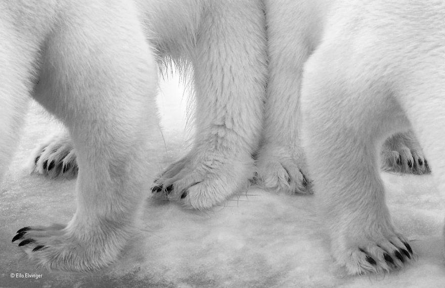 'Polar Pas De Deux' By Eilo Elvinger, Luxembourg, Black And White Winner