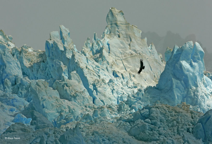 'Realm Of The Condor' By Klaus Tamm, Germany, Animals In Their Environment Finalist