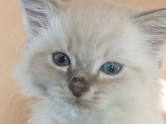 Luna Became Miss Blue-Eyes, Grumpy Or Pissypants (She Has Urinary Problems And Tends To Pee Everywhere)