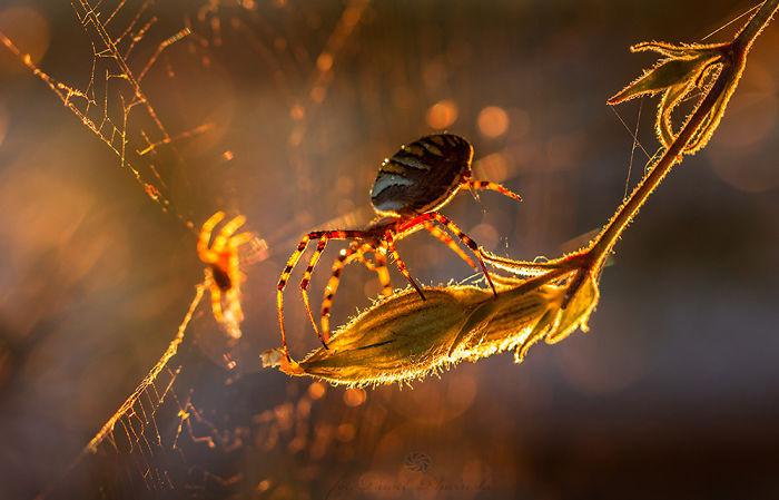 My Macro Photography Of Tiny Creatures