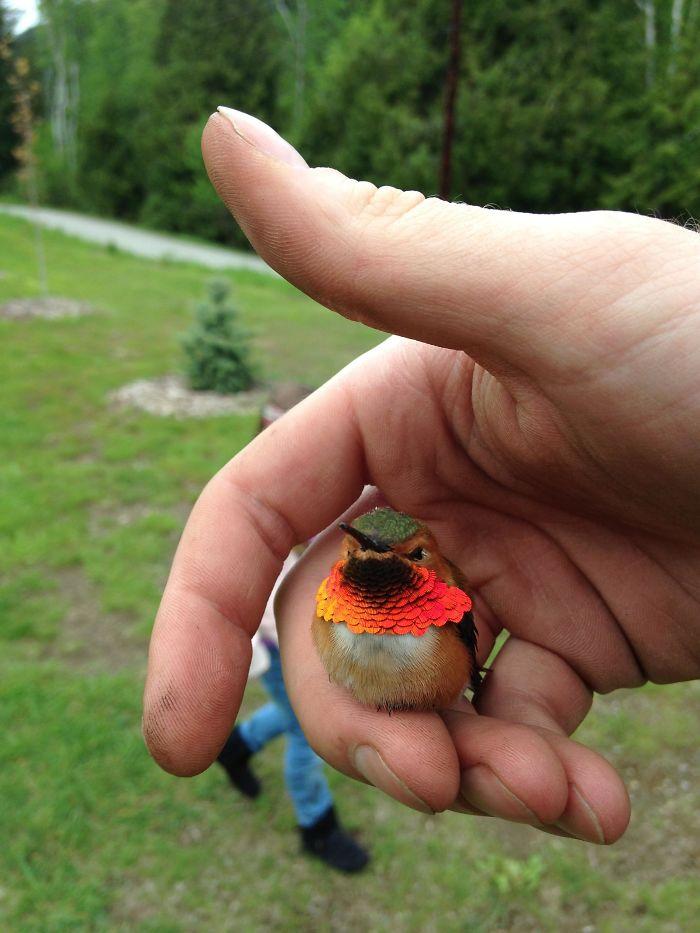 Friendly Little Hummingbird
