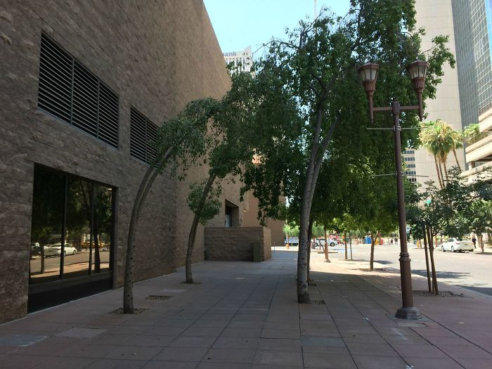 These Trees Are Curved Due To The Constant Airflow From Nearby Exhaust Vents