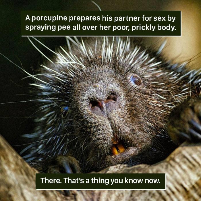 Animal-Facts-Weird Nature