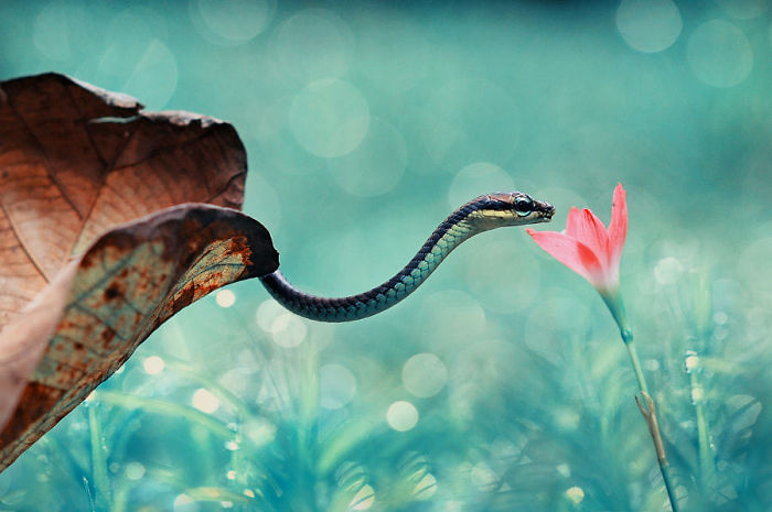 Snake With Flowers